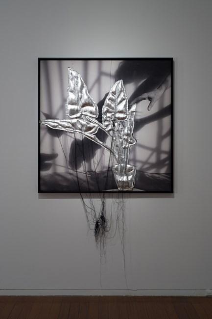 #rothwellofficeplants, @annagramer by Caroline Rothwell contemporary artwork