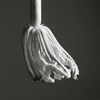Nature - Fleur de courgette by Jean-Baptiste Huynh contemporary artwork photography, print