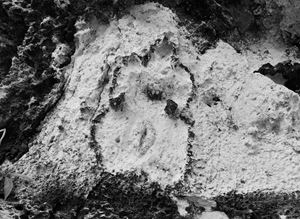 Maroya (Esculturas Rupestres) by Ana Mendieta contemporary artwork