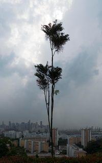 Man Tree by Hu Jieming contemporary artwork photography