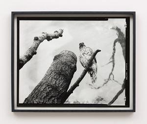 Twelfth beast by Gerard Byrne contemporary artwork