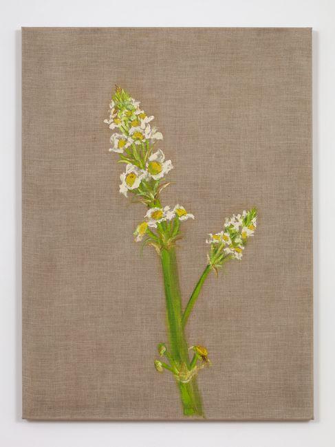 Flor (Flower) by Marcia Schvartz contemporary artwork